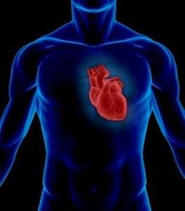 Le coeur et les effets de l'électrocution