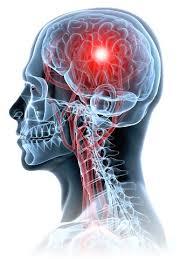 Electricité et système nerveux
